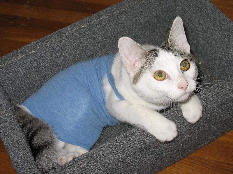 tshirt-cat.jpg