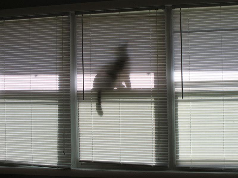 Kallie in the window